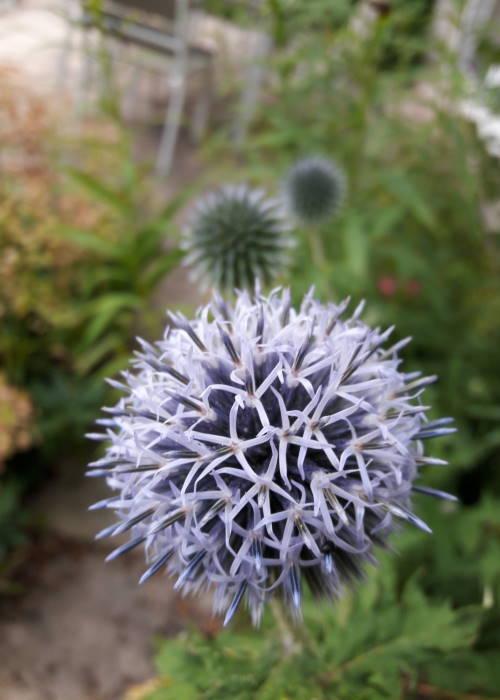 Photo de fleur du jardin